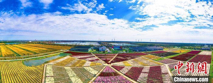 第五届江苏菊花文化艺术节在射阳开幕 千余品种菊花引客来